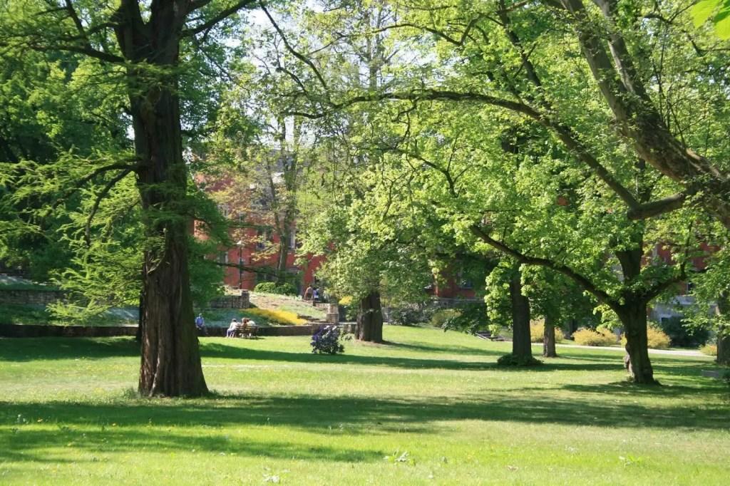 Park pałacowy w Pławniowicach