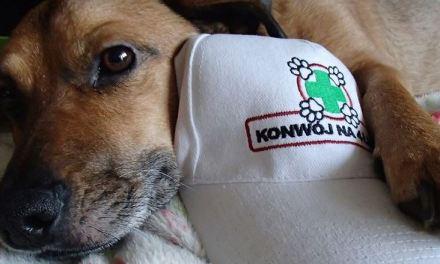 Konwój na 4 łapy – akcja off-roadowa dla zwierząt w schroniskach