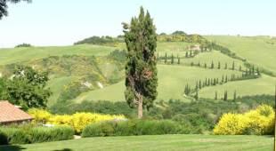 I Cipressi - Val d'Orcia (SI)