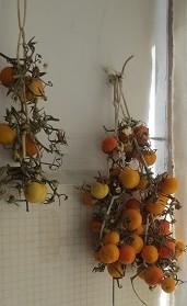 vintertomater till svampen