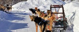 Trineo tirado por perros en Laponia noruega