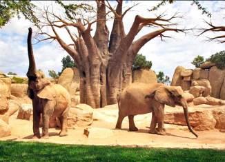 Elefantes de Bioparc Valencia