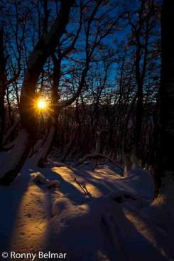 Un cerrado bosque de Nothofagus (Lengas, Coihues y Ñirres) es una protección ideal contra el frío viento