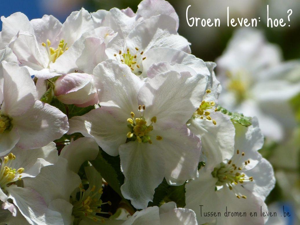Groen leven: hoe starten ? – Deel 1 –