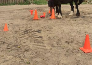 Systemsische paardencoaching