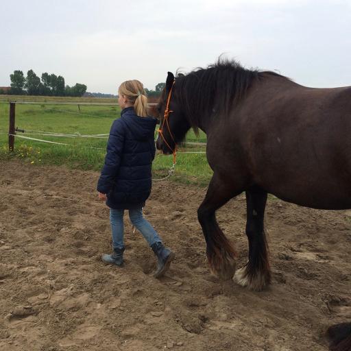 Kindercoaching met paarden