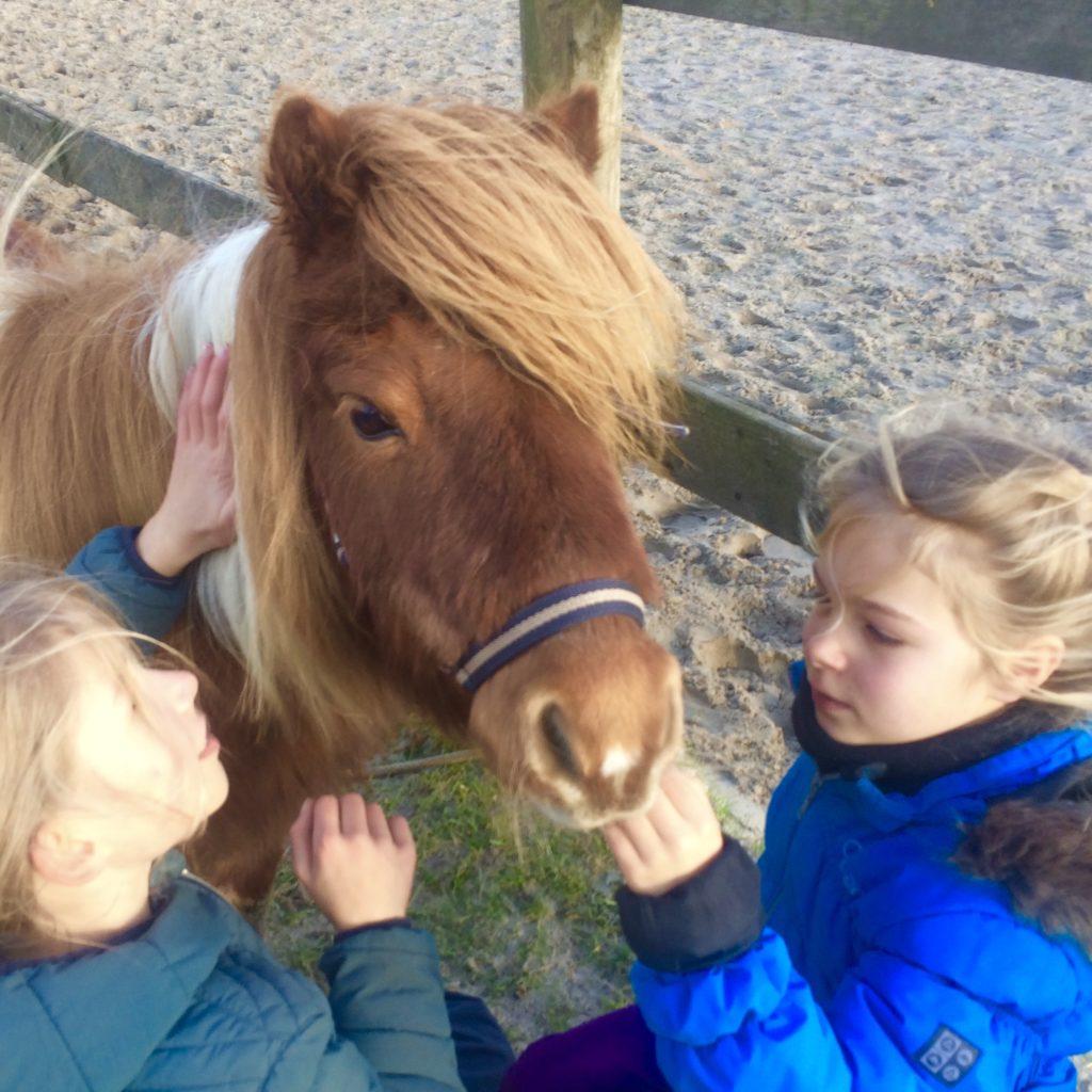 Onvergetelijk verjaardagsfeestje voor kinderen met pony's en paarden