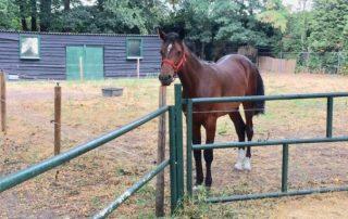 Over een een paard alleen - BLOG