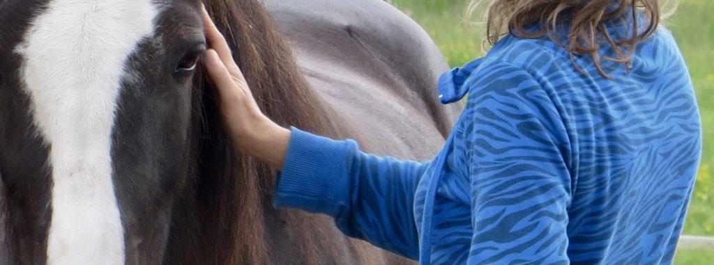 Paarden coaching begint met het maken van contact