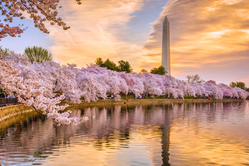 Cherry Blossom. Facial & Massage Combo Special in Washington DC