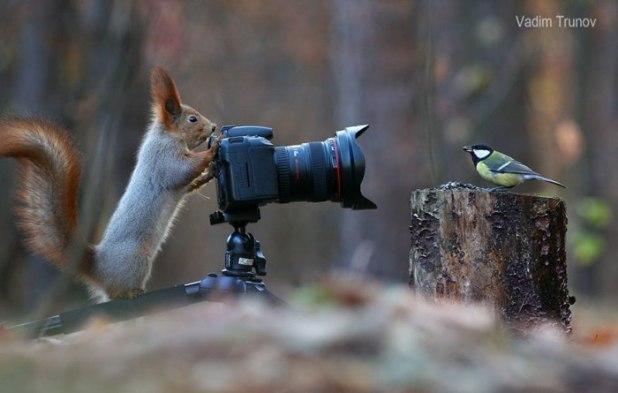 Οι Παιχνιδιάρικοι Σκίουροι από τον Vadim Trunov