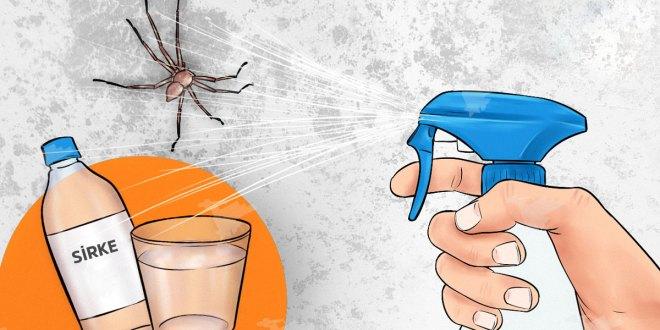 Doğal örümcek kovucu tarifi
