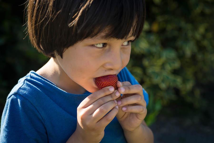 deguster une fraise