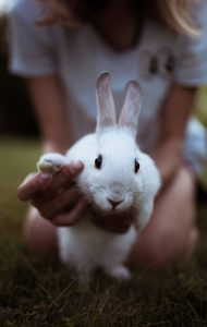 Comment S'occuper D'un Lapin Nain : comment, s'occuper, lapin, Comment, S'occuper, Lapin, Tutokoman