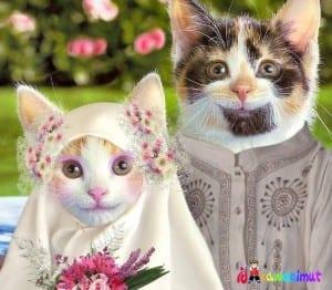 DP BBM Kucing Lucu Menggemaskan Terbaru 2018