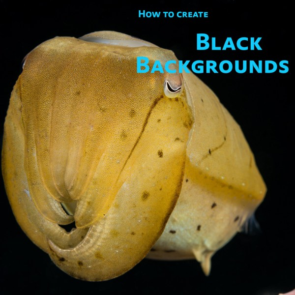 Black Backgrounds tutorial video