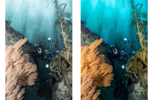 essential-editing-for-underwater-photos-1