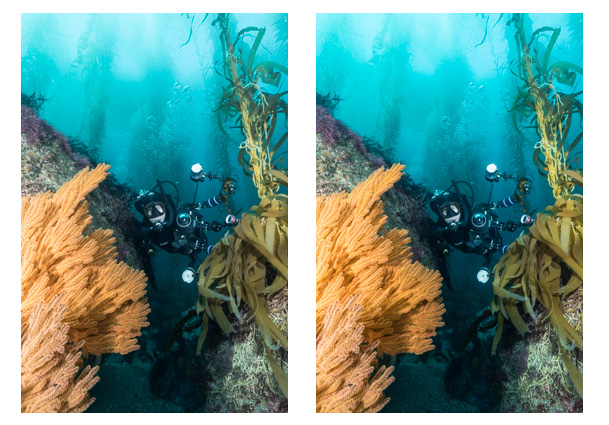 vibrance-saturation-for-underwater-photos