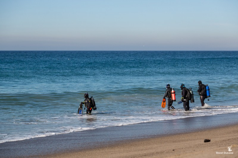 california shore divers in malibu