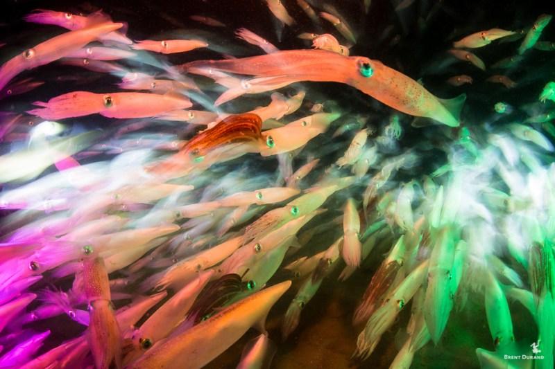 redondo beach squid run color experiment