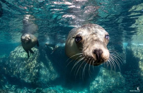 sea-lion-portrait-in-los-islotes-la-paz