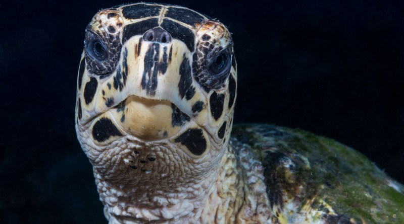 underwater portraits photo tips turtle