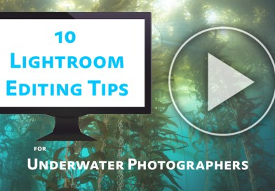 10 Lightroom Editing Tips for Underwater Photographers