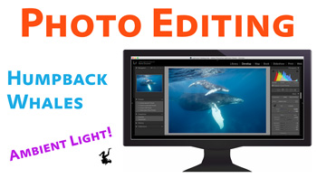 Edit This Photo - Humpback Whales video thumbnail