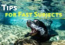tips to capturing fast subjects underwater