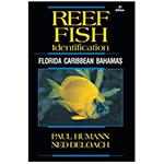 Reef Fish Identification, Florida, Caribbean, Bahamas