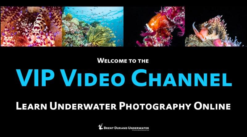 underwater photo classes online videos