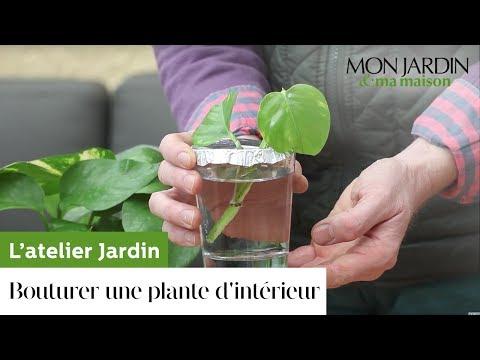 Comment bouturer une plante d'intérieur