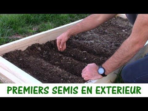 PREMIERS SEMIS EN EXTERIEUR / oignons, poireaux et laitues
