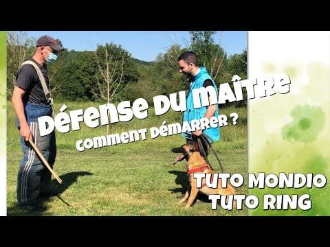Défense du maître : la première  pour un jeune chien – tuto ring – tuto mondioring – techniques