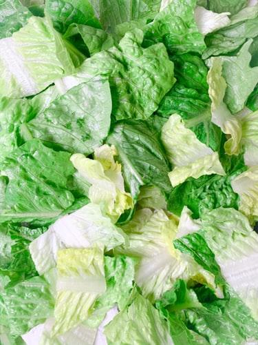 insalata conservare frigo