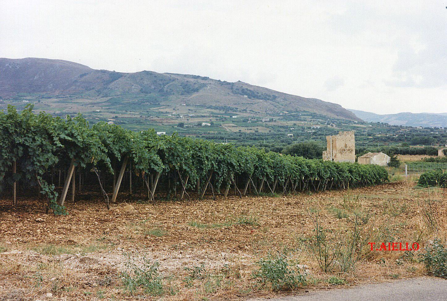 Belice La trasformazione del paesaggio agrario  di