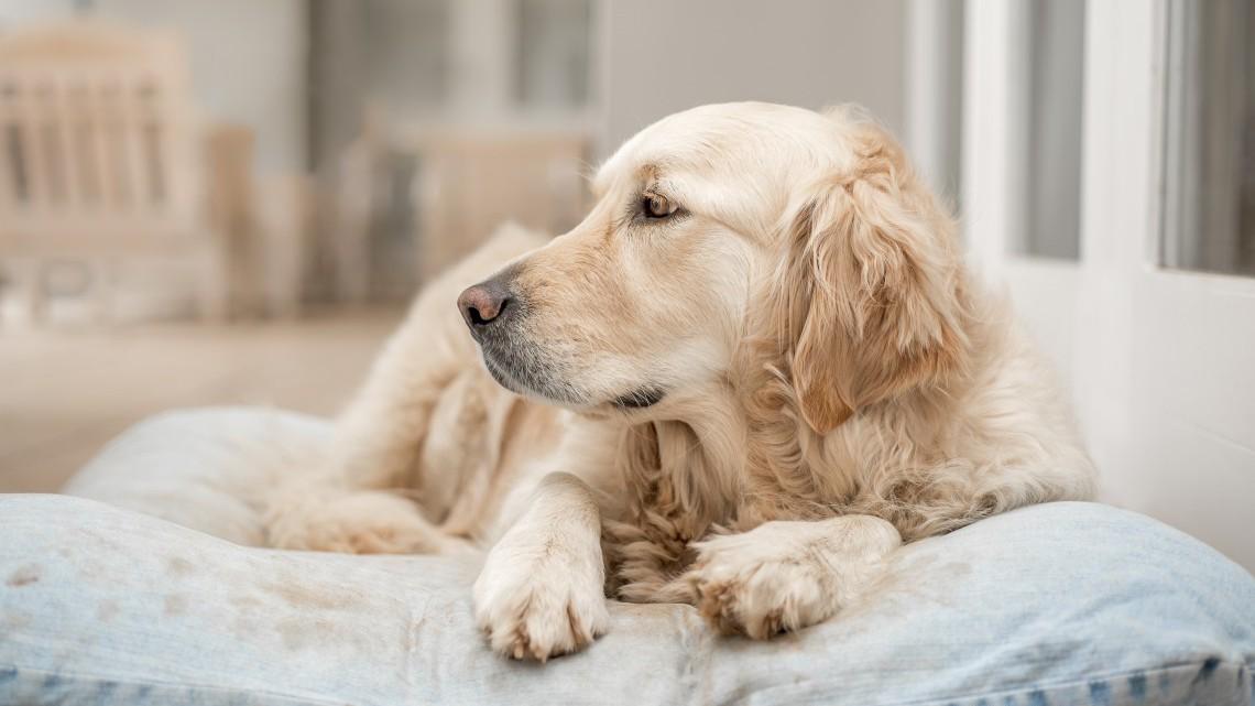 Artrosi dei cani: come curarla e come prevenirla?