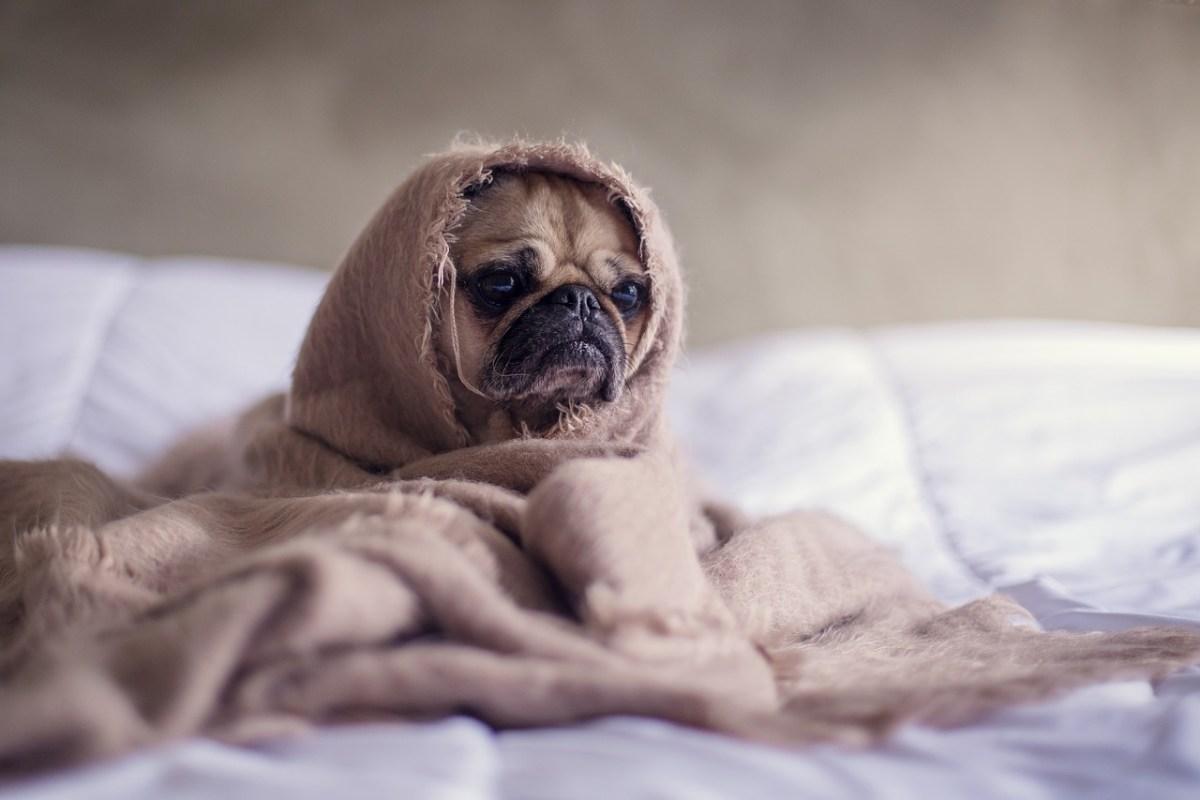 Cani e ansia di separazione dal padrone: quali sono le soluzioni?