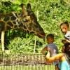 Cosa significa sognare uno zoo