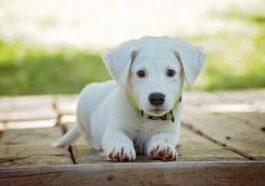 Sognare un cucciolo di cane che non cresce mai: sogno di Zaccaria