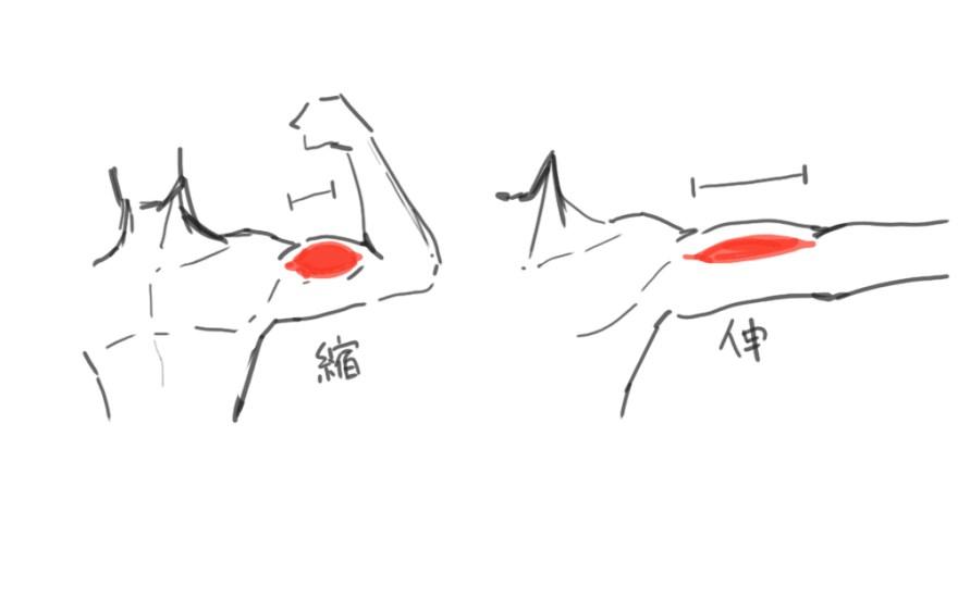 腕の描き方5