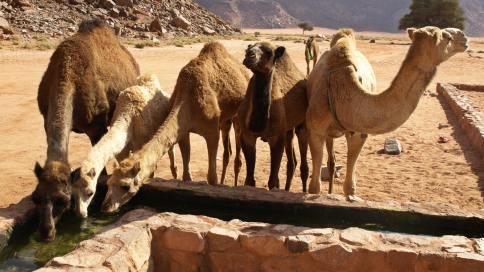 Nasi przyjaciele na pustyni:)