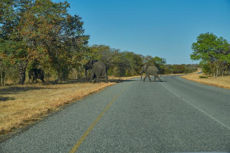 Uwaga na słonie podczas jazdy!