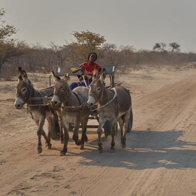 Napotkany pod drodze mieszkaniec wioski