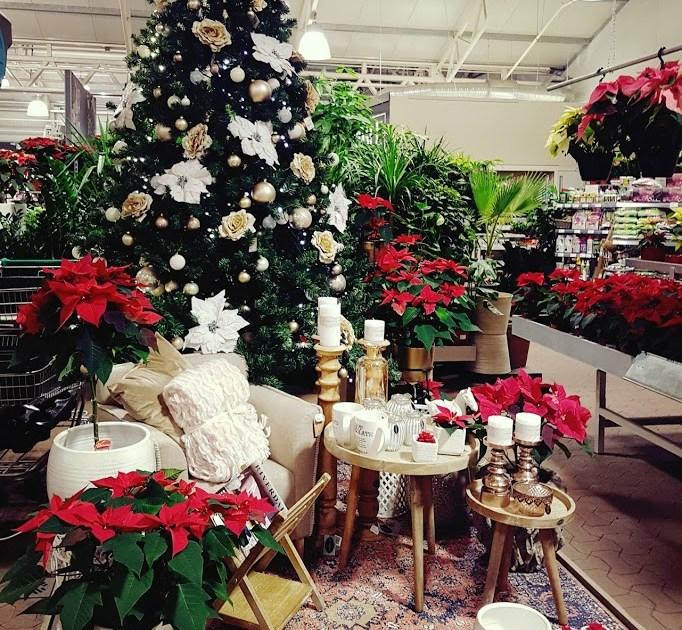 Jõuludeni vaid loetud päevad! Imeline jõulumaa Hansaplatis pakub ohtralt kingi- ja kodukaunistamise ideid