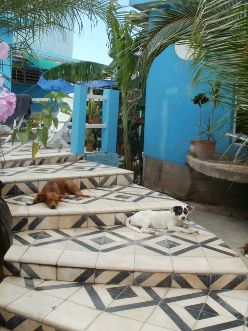 Cuban Tile   Tuvalu Home