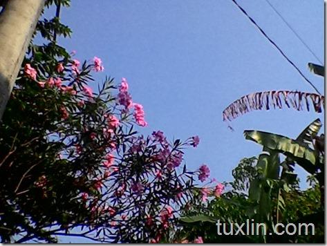 Review Kamera Asus Zenfone 4 Tuxlin Blog_21