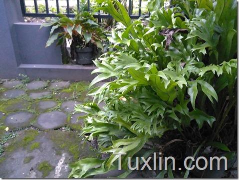 Hasil Foto Kamera Infinix Hot 3 X553 Siang Hari