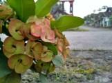 Sampel Foto Kamera Xiaomi Redmi 4X