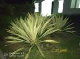 Hasil Foto Kamera Infinix Hot S3 X573 Malam Hari dengan LED Flash